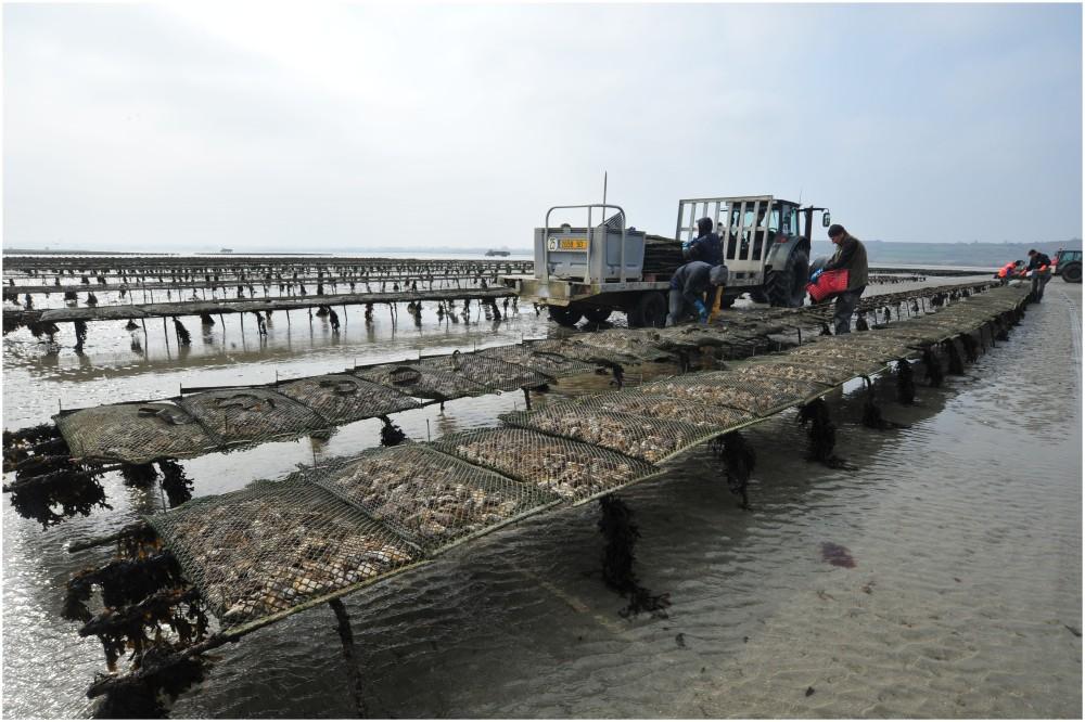 Parc à huîtres
