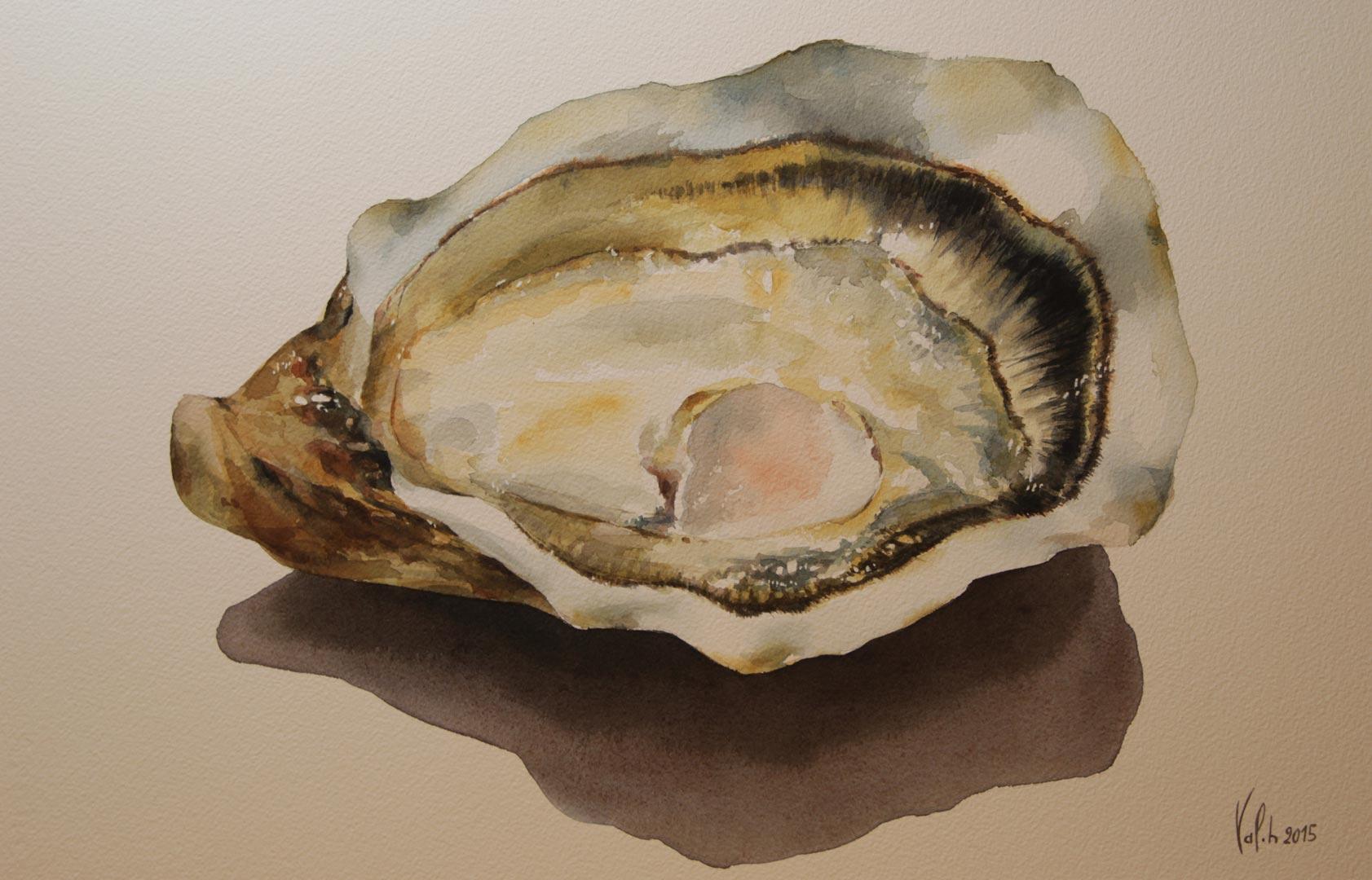 Saint-Vaast oyster